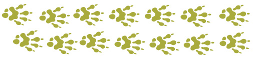 Explore-Botswana-Animal-Footprint-Rates
