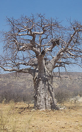 Explore-Botswana-route_back_to_basics_What_is_included