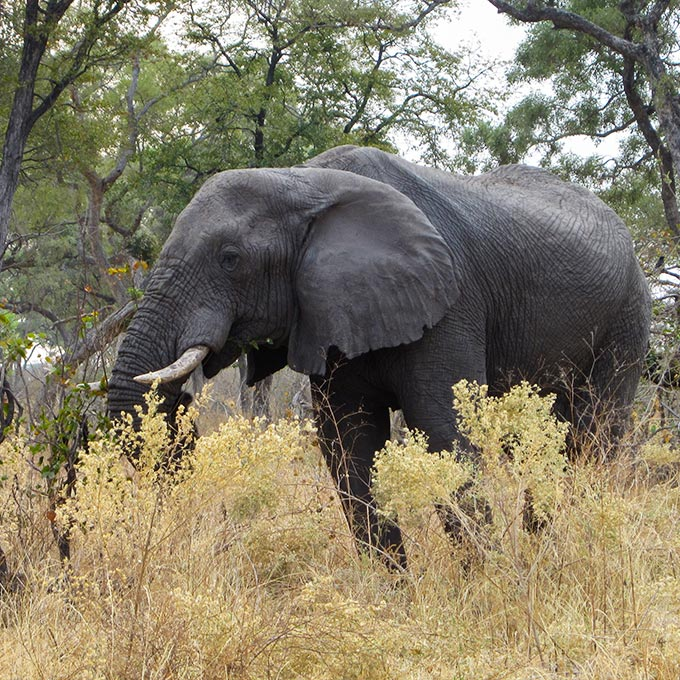 Explore-Botswana-route_highlights_End-of-tour-Departure-Arrival-Home-03